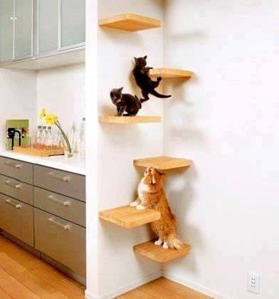 d903e5b005ad Παιχνίδια για γάτες !