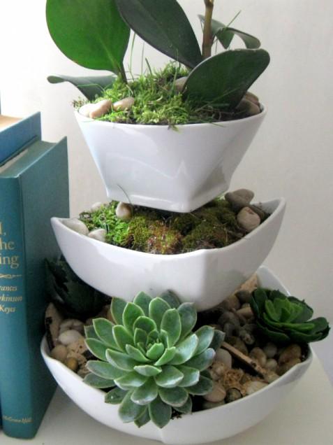 succulentplanter